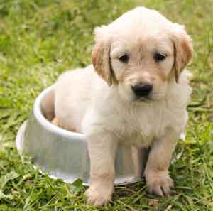 Puppy Potty Training: The Ins and Outs